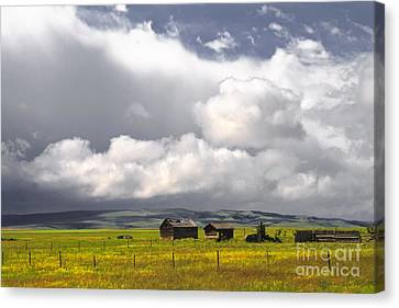 Canadian Prairie Canvas Print