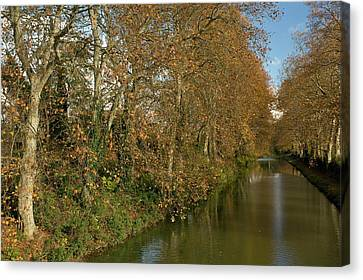 Canal Du Midi And Plane Trees Canvas Print by Bob Gibbons