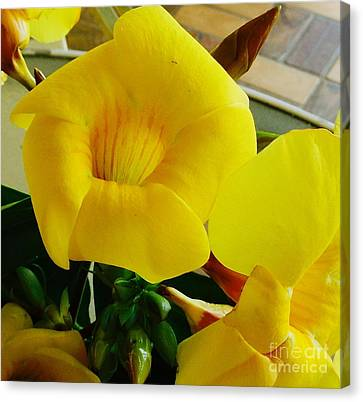 Canario Flower Canvas Print