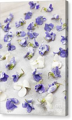 Making Canvas Print - Candied Violets by Elena Elisseeva