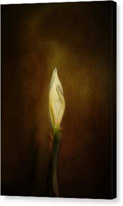 Candle In The Wind Canvas Print by Anne Rodkin