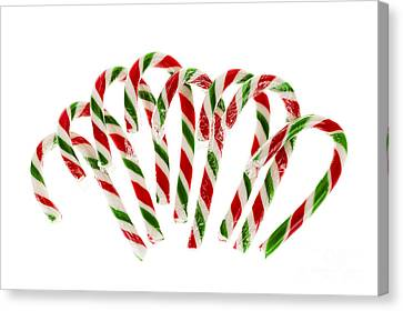 Candy Canes Canvas Print by Elena Elisseeva