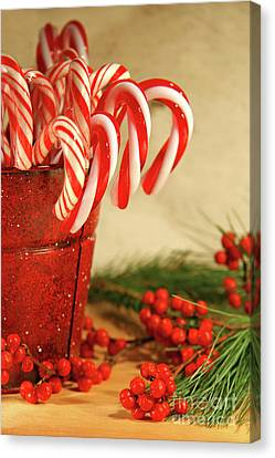 Candycanes With Berries And Pine Canvas Print by Sandra Cunningham