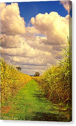 Cane Fields Canvas Print by Wallaroo Images