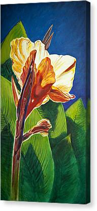 Canna Lilly Sunrise Canvas Print by Kent Looft