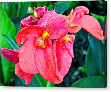 Canna In Red Canvas Print by Larry Bishop