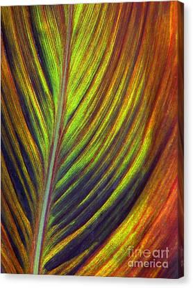 Canna Leaf Canvas Print