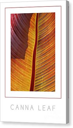 Canna Leaf Poster Canvas Print by Mike Nellums