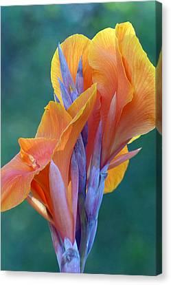 Canna Lily Canvas Print by Cindy McDaniel