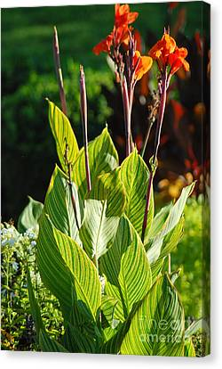 Canna Lily Canvas Print by Optical Playground By MP Ray