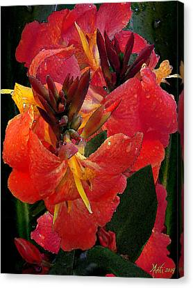 Canna Lily Canvas Print by Michele Avanti