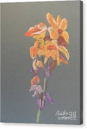 Canna Canvas Print by Pamela  Meredith