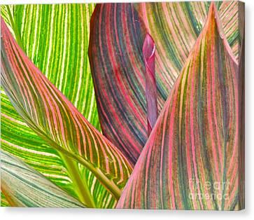 Canna Tropicana Color Canvas Print by Eve Spring
