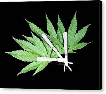 Cannabis Cigarettes And Leaves Canvas Print by Adam Hart-davis