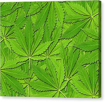 Reliefs Canvas Print - Cannabis Leaves by Victor De Schwanberg