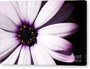 Close Focus Floral Canvas Print - Cannington Roy by Anne Gilbert