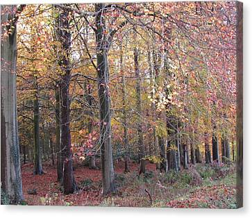 Cannock Chase Canvas Print by Joyce Woodhouse