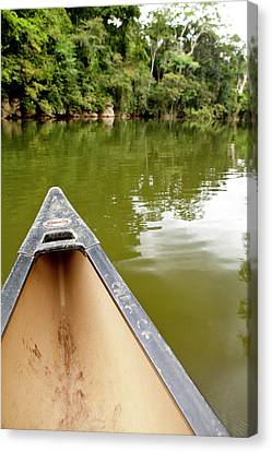 Canoeing The Macal River In Jungle Canvas Print