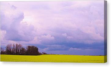 Canola Field Canvas Print by Cathy Long
