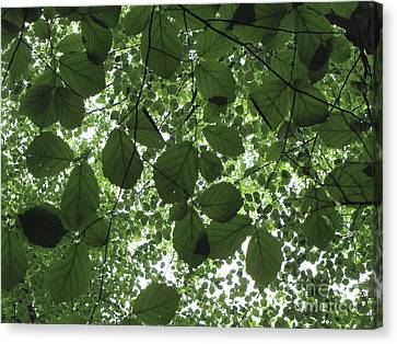 Canopy In Green 3 Canvas Print by Melissa Stoudt