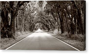 Canopy Of Trees Canvas Print by Bill Howard