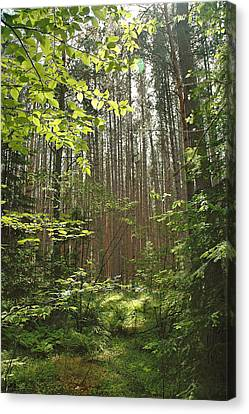 Canopy Canvas Print by RJ Martens