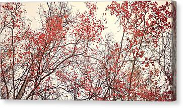 canopy trees II Canvas Print by Priska Wettstein