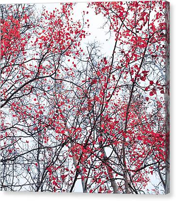 Canopy Trees Canvas Print by Priska Wettstein