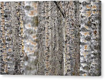Can't See The Wood For The Trees Canvas Print by Dee Cresswell