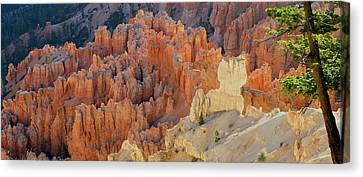 Canyon Pine Canvas Print