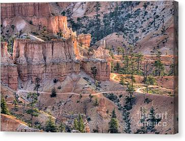Canyon Trails Canvas Print