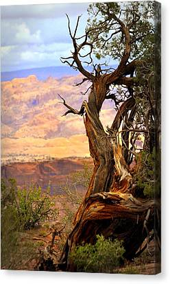 Canyon Vista 1 Canvas Print by Marty Koch