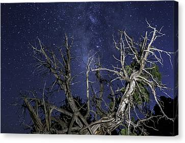 Canyonlands Night Sky Canvas Print by Michael J Bauer
