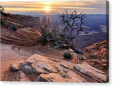 Canyonlands Sunrise Landscape With Dry Tree Canvas Print by Yevgen Timashov