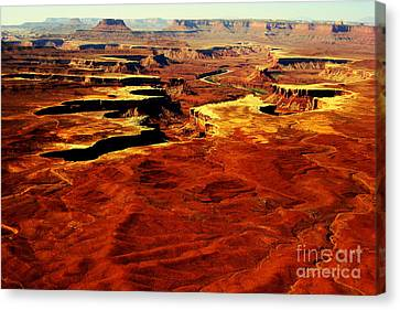 Canyonlands White Rim  Canvas Print by Terry Johnson