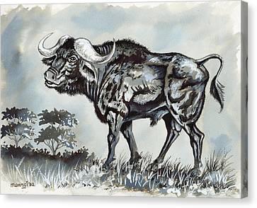 Cape Bufallo Canvas Print by Anthony Mwangi