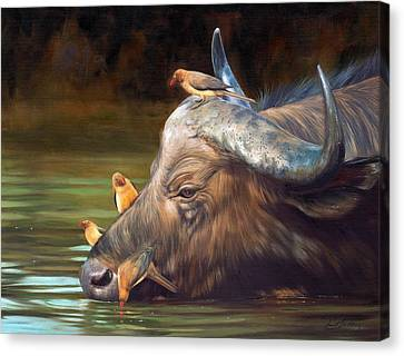 Cape Buffalo And Oxpeckers Canvas Print by David Stribbling