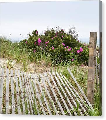 Cape Cod Beach Roses Canvas Print by Michelle Wiarda