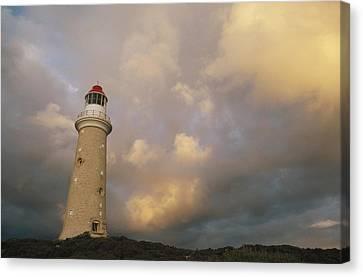 Cape Du Couedic Lighthouse Kangaroo Canvas Print by Gerry Ellis