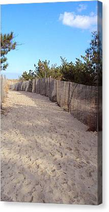 Cape Henlopen 5 Canvas Print by Cynthia Harvey