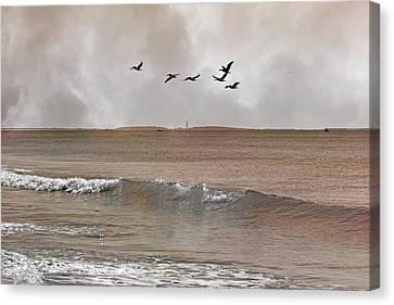 Cape Lookout Pelicans Canvas Print by Betsy Knapp