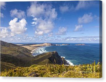 Cape Maria Van Diemen Northland New Zealand Canvas Print by Colin and Linda McKie