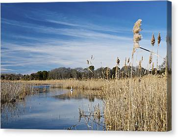 Cape May Marshes Canvas Print by Jennifer Ancker