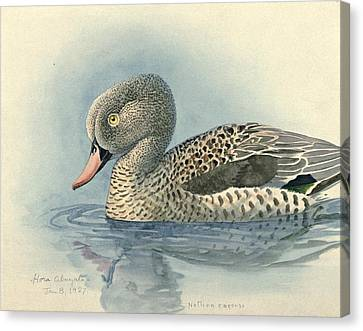 Cape Teal Canvas Print by Rob Dreyer