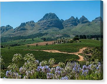 Cape Winelands - South Africa Canvas Print by Photos By Pharos