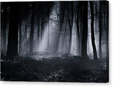 Thriller Canvas Print - Capela Forest by Julien Oncete