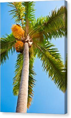 Capistrano Palm Tree - Digital Photo Art Canvas Print by Duane Miller