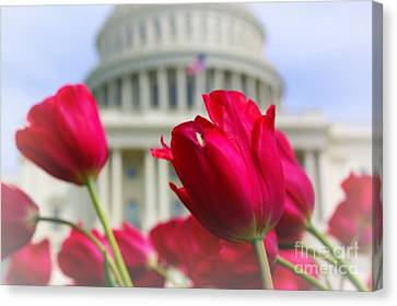 Canvas Print featuring the photograph Capital Flowers  by John S