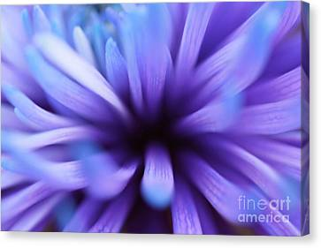 Captivation Canvas Print by Inspired Nature Photography Fine Art Photography