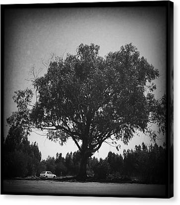 Car Parked Under A Tree Canvas Print